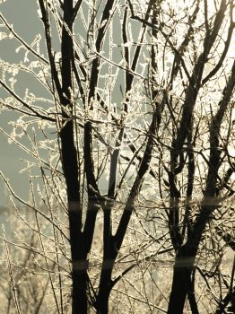 Sun and Winter Series #5 by ArdierPhotography