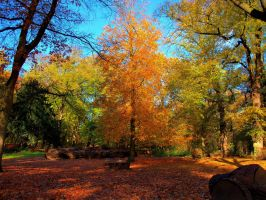 Beauty of autumn 1 by pagan-live-style