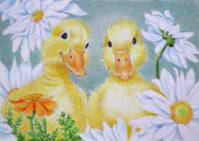 Ducks and Daisies by waughtercolors