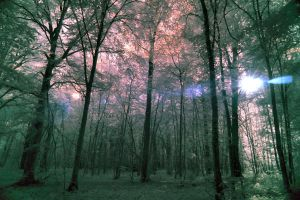 The Forest late afternoon by pohlmannmark