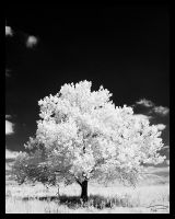 IR Tree by Photo-Cap