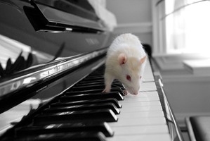 Squiggy plays the piano..again by bunnygal268