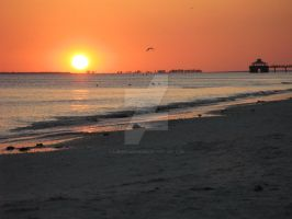 Tampa Bays by SuburbanCowgirl
