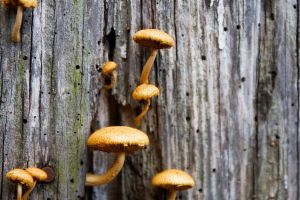 The Mushrooms 02 by lifeinedit