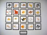 A Catalogue of Goldfish by Jarino