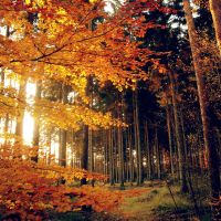 autumn 9 by all17