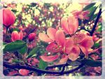 Blossoming apple tree-4 by SteelNat
