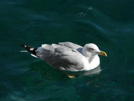 Gull by Here-is-MaryLou