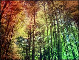 In The Forest. by Sparkle-Photography