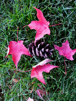 Fall 2015 - Regal Elementary - Leaves and pinecone by Ryven