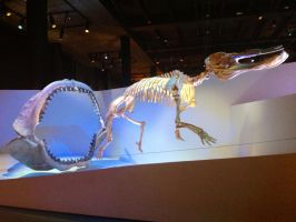 My time at the Houston museum part 7 by Joel-Cevallos
