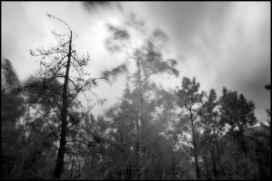Haunted Woods by AndersPhotography