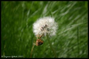 just a little puff of wind. by Nariane
