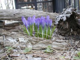 Signs of spring by darchiel