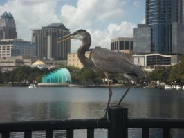 Lake Eola [3] by vanazza