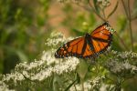 Monarch September - 2014 - 6 - 2 by toshema