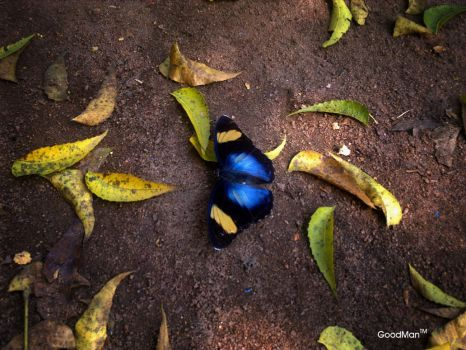 Butterfly by ololade