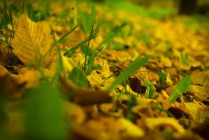 yellow and green by LordBurevestnik