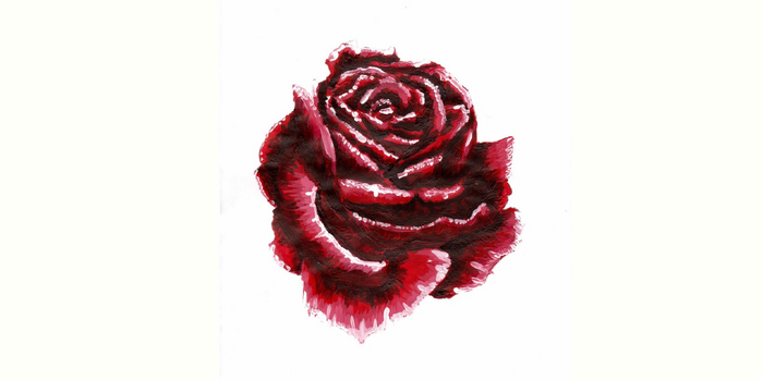 Rose painting by Weatherwings0978