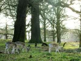 Fallow Stags :Stock by Flynn-the-cat