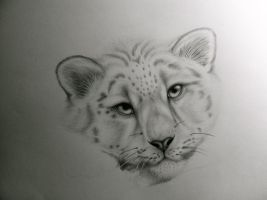 Snow Leopard by Climmie