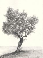 Olive Tree Pencil Drawing by aakritiarts
