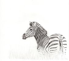 Zebra drawing by RafaelDavid