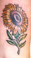Sunflower by Slobula
