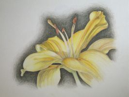 Yellow Lily Drawing by I-Am-Coma-White