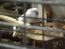 White Parrot 3 by In2FF7