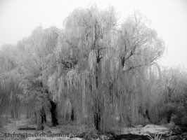 Frozen Tree by AndreyAnev