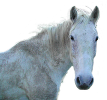 Horse2 PNG stock by lubman