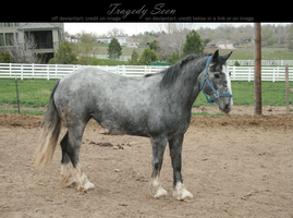 blue roan stock 88 by tragedyseen