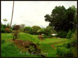 nature in Sri lanka by yesmeena