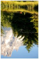 Teton Reflections by Raymaker