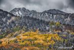 Blanket of Autumn Colors by mjohanson
