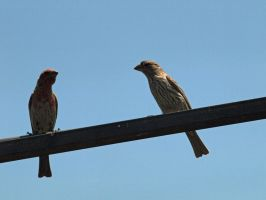 Mr. and Mrs. Finch by photographyflower