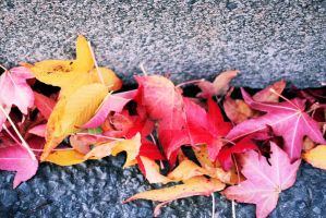 Fall Continued by SpawnedImages