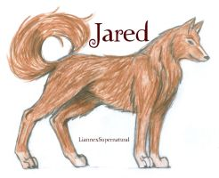 Jared Wolf Form :D by LiannexSupernatural