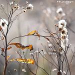 Delicacy_of_the_Autumn ID by hyneige