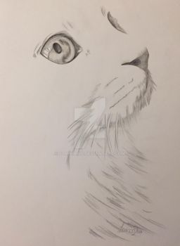 Cat Drawing || Traditional Art by Somniaris