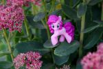 My little pony: In the Jungle by Uligma