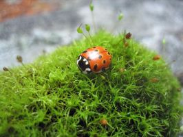 Life of a coccinellidae by FroZnShiva