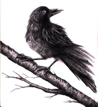 Crow by Coffeehouseartist