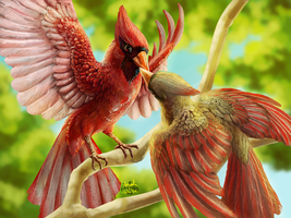 Cardinals by r-20