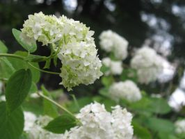 White Clusters by lamarble
