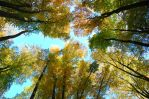 autumn beech forest by Wilithin