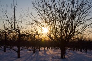Through The Orchard Trees by Eternalfall1