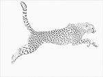 Cheetah lineart (free) by LineCrazy