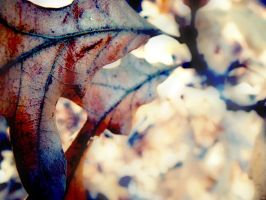 Frosted to Death leaf by JessyRae-Photography